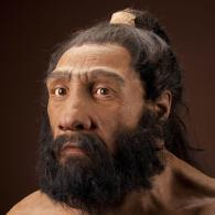 Image Credit: John Gurche, artist / Chip Clark, photographer Taken from http://humanorigins.si.edu/