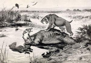 A Smilodon and a direwolf (quite possibly Shaggydog) fight over a Mammoth carcass in the La Brea Tar Pits. Author: Rober Bruce Horsfall 1913, from Wikipedia