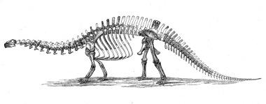 Brontosaurus_skeleton_1880s