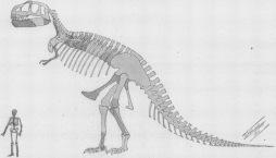 Tyrannosaurus_skeleton