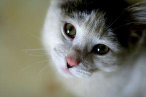 Cat_Cute