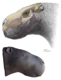 Reconstruction of head